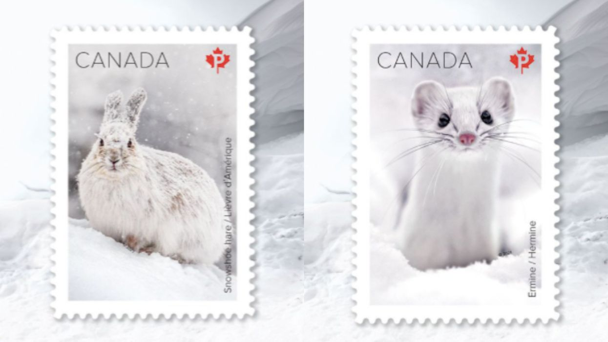 Canada Has The Most Adorable & Rare Winter Mammals Being Featured On Stamps Right Now