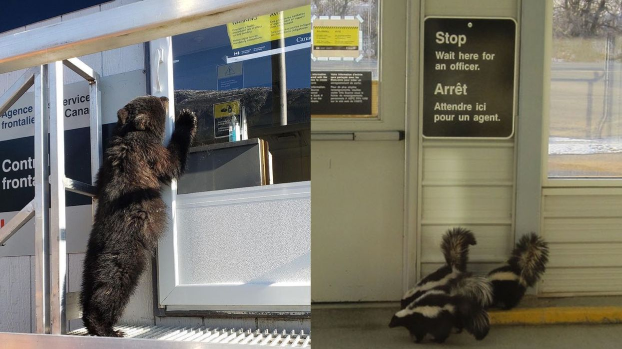 Canada's Border Restrictions Are Being Ignored By Some Animals & The Pics Are Perfect