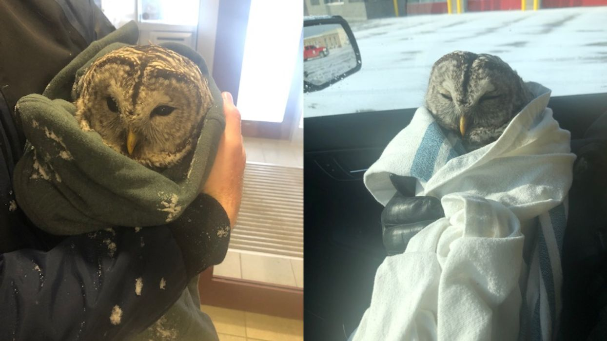 Ontario Police Rescued An Injured Owl & The Adorable Photos Are A Total 2021 Vibe