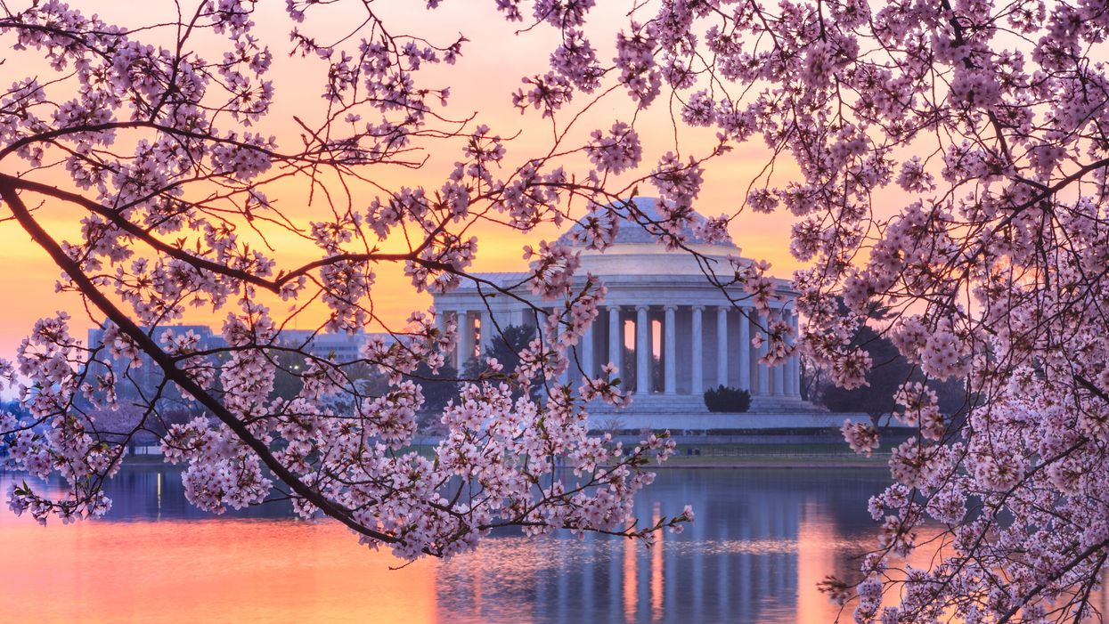 Here's Where You Can Find The Most Gorgeous Japanese Cherry Blossoms This Spring