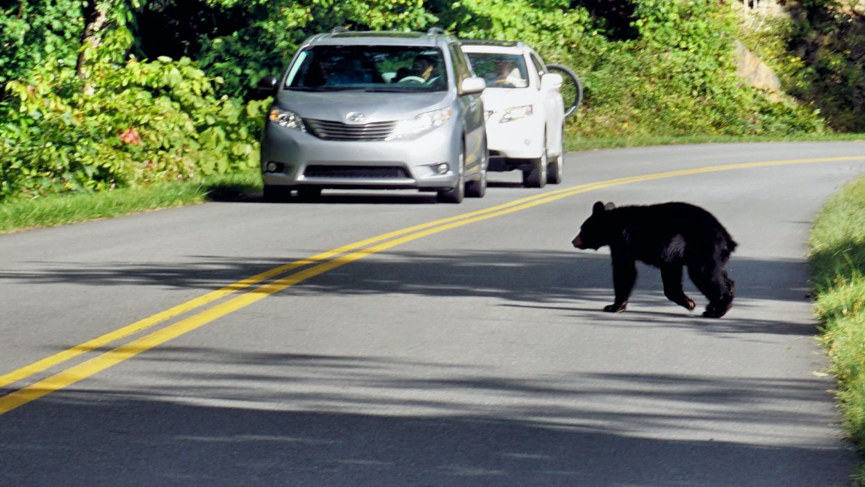This Mama Bear Did The Most To Get Her Cubs Off The Street But It's Adorable Chaos (VIDEO)