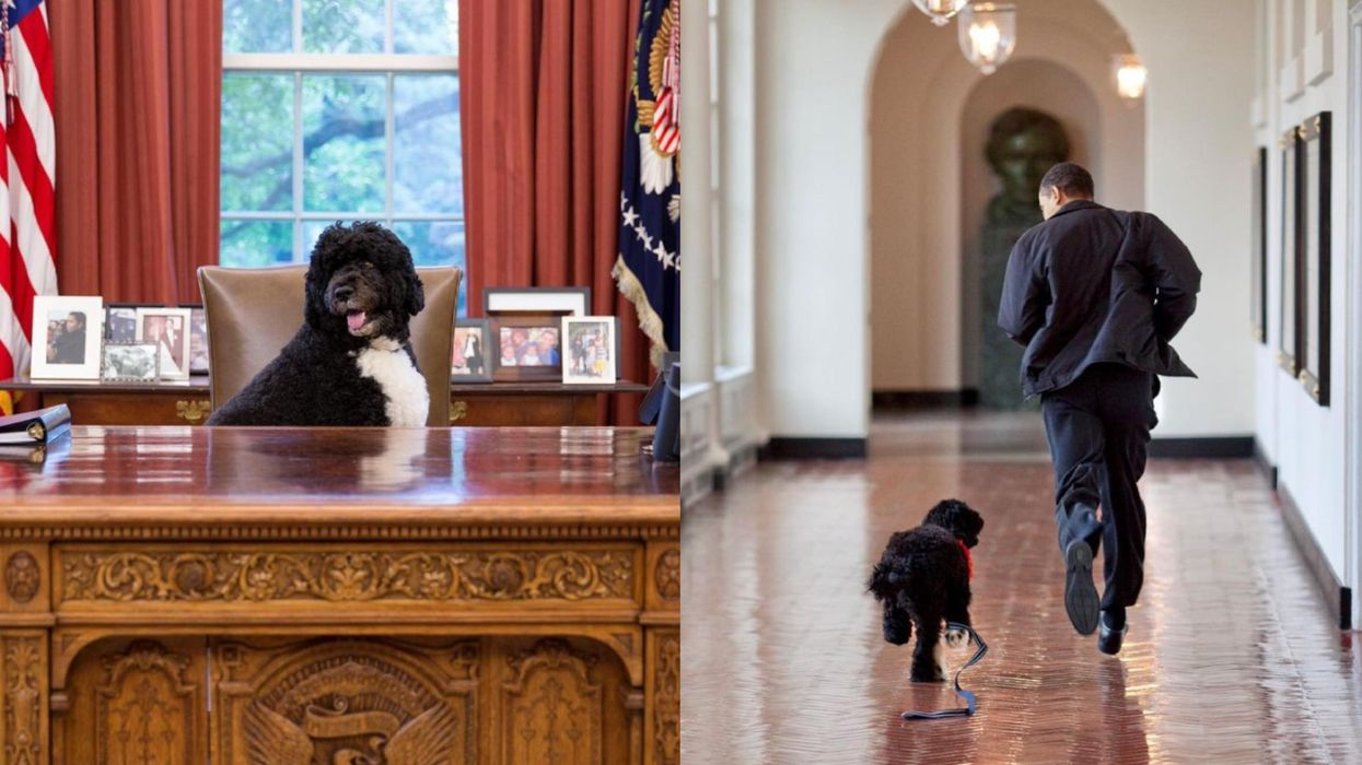 Barack Obama's Dog Bo Died & The Family's Tributes Will Break Your Heart