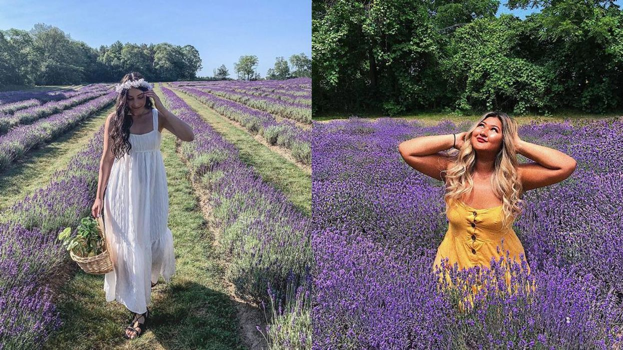 9 Ontario Lavender Farms Where You Can See Thousands Of Flowers