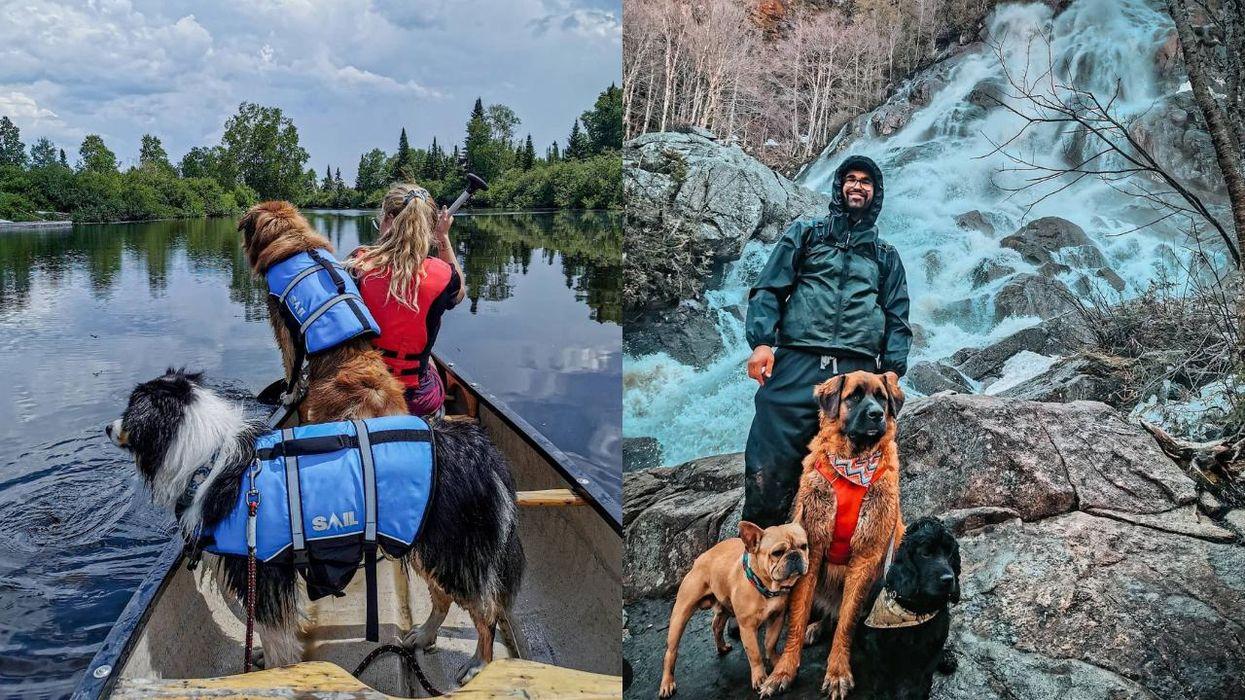 8 randonnées que tu peux faire avec ton chien cet été au Québec
