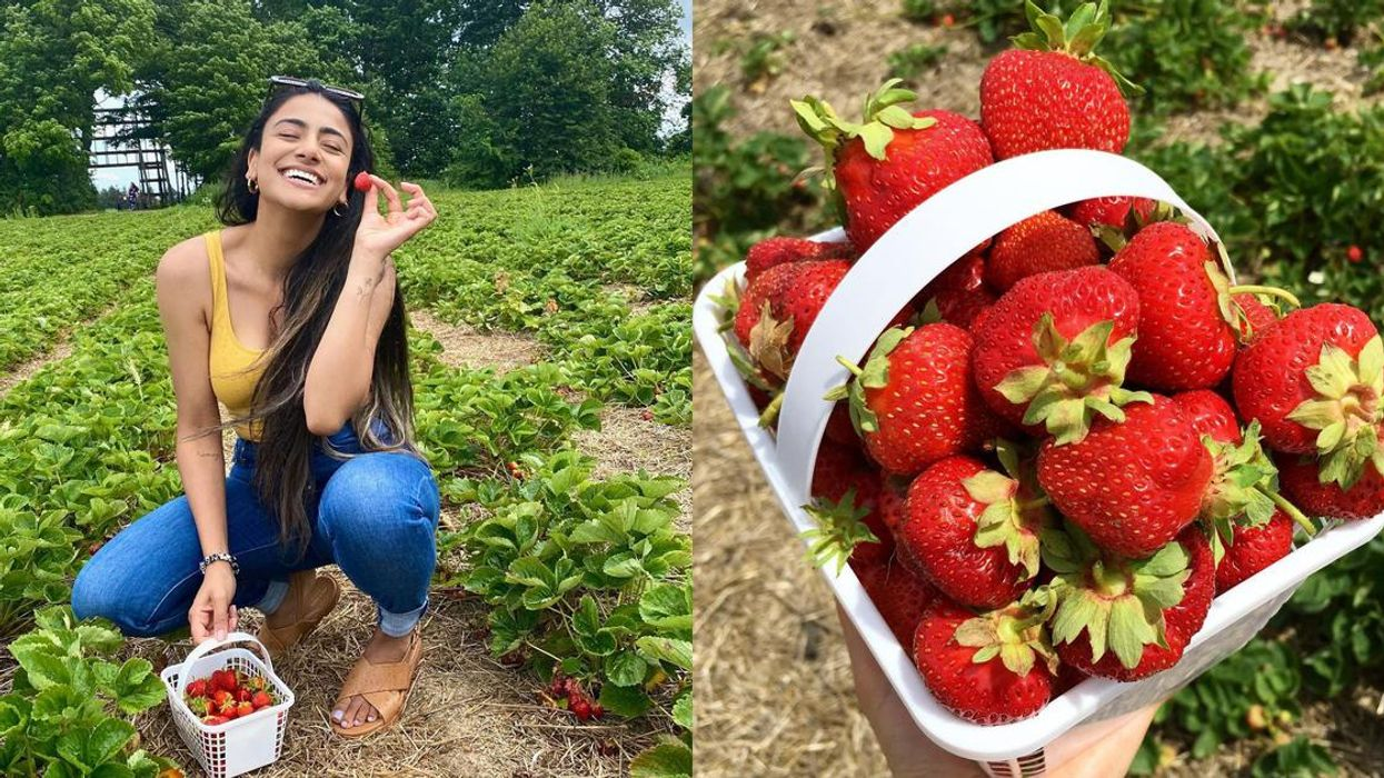 9 Farms Where You Can Pick Your Own Berries In Ontario This Summer