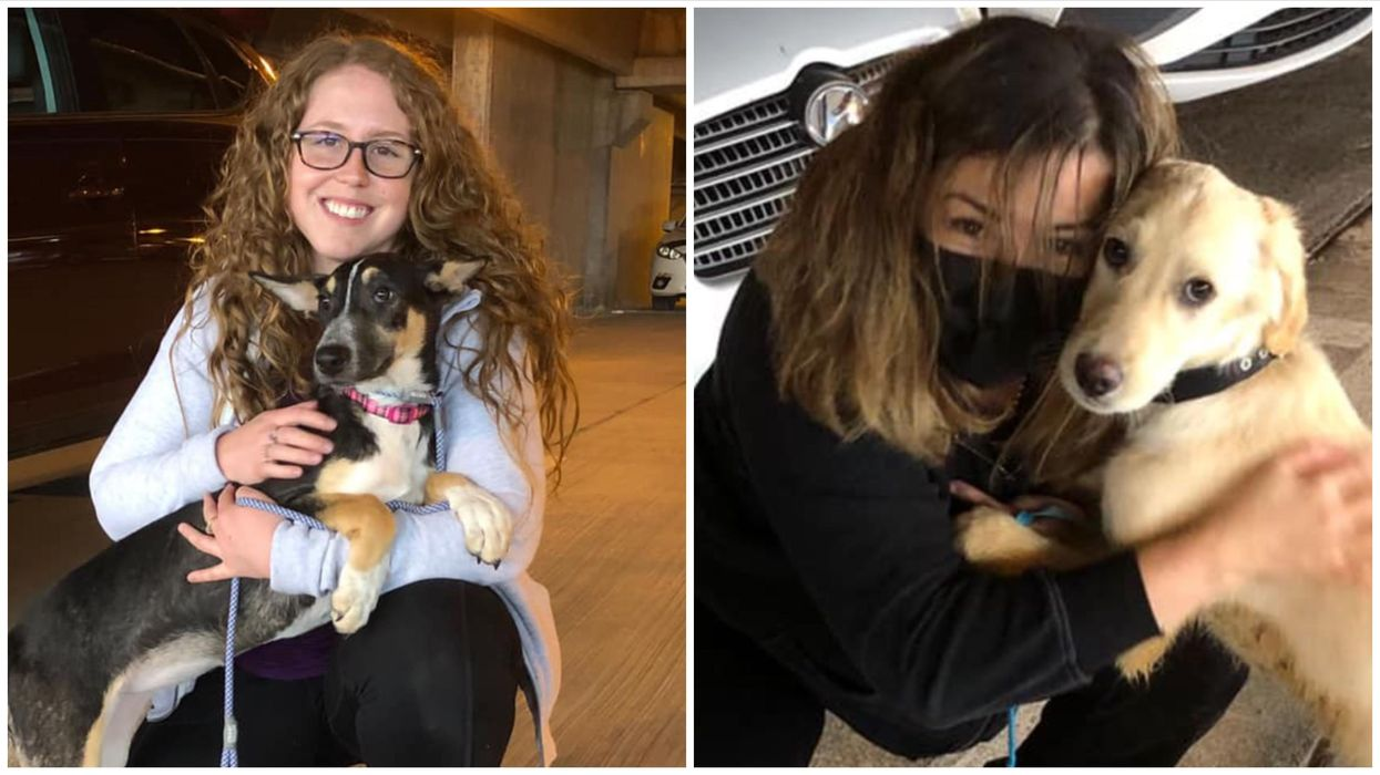 19 Rescue Dogs In Canada Just Met Their Forever Families (PHOTOS)