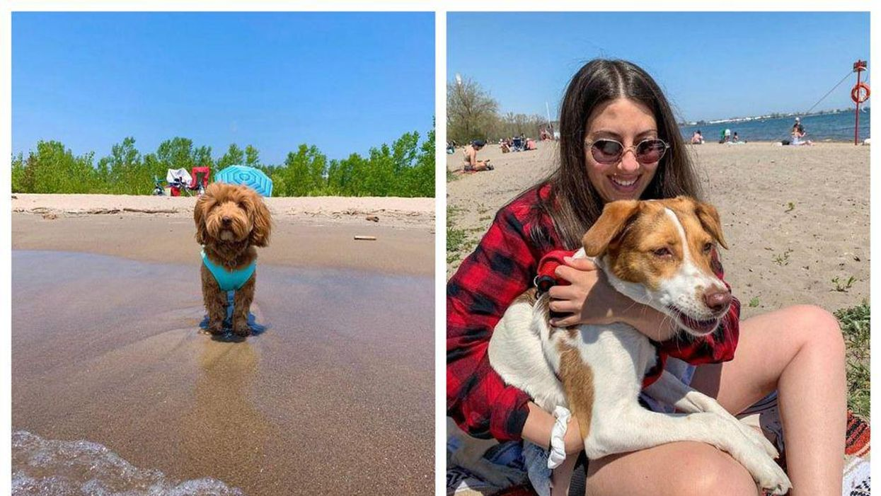 8 Dog-Friendly Beaches Near Toronto Where You Can Enjoy The Sun With Your Pup