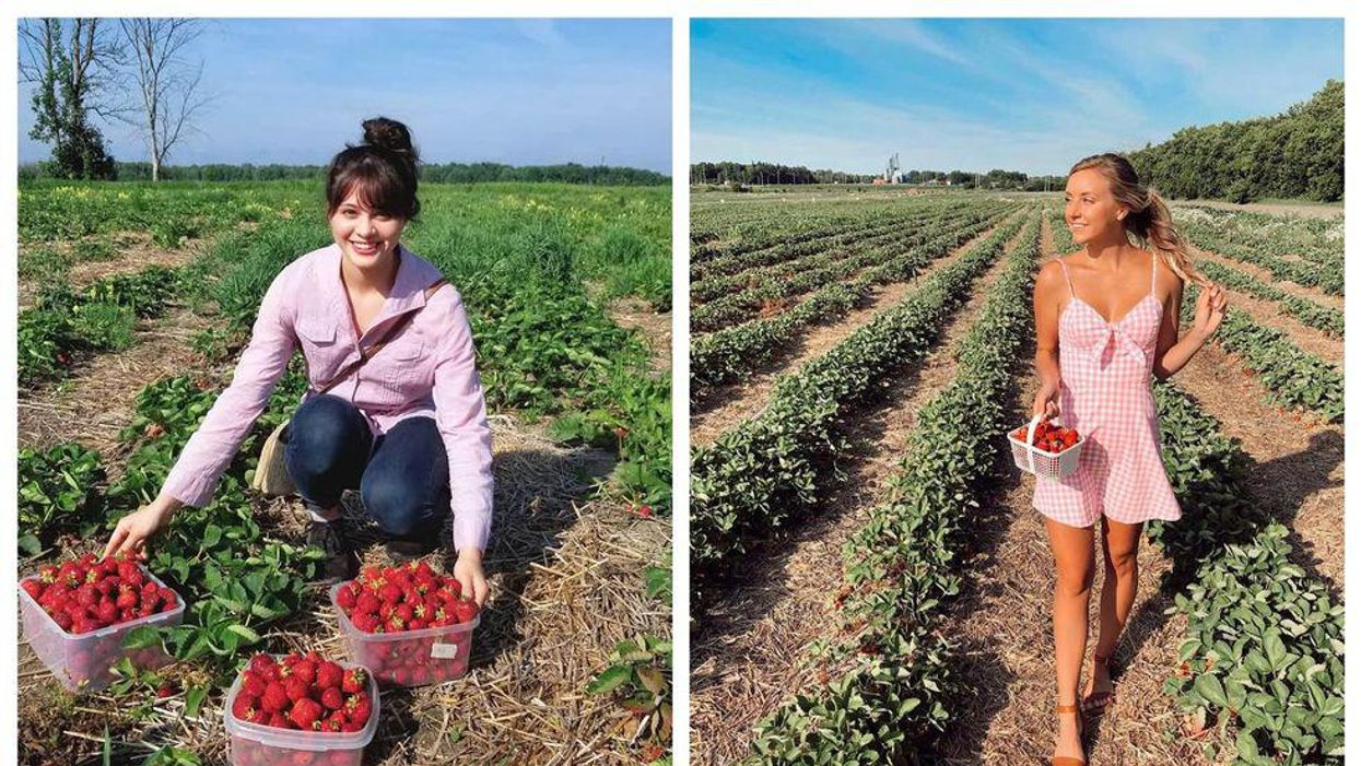 Pick Your Own Strawberry Farms Near Ottawa To Visit This Summer