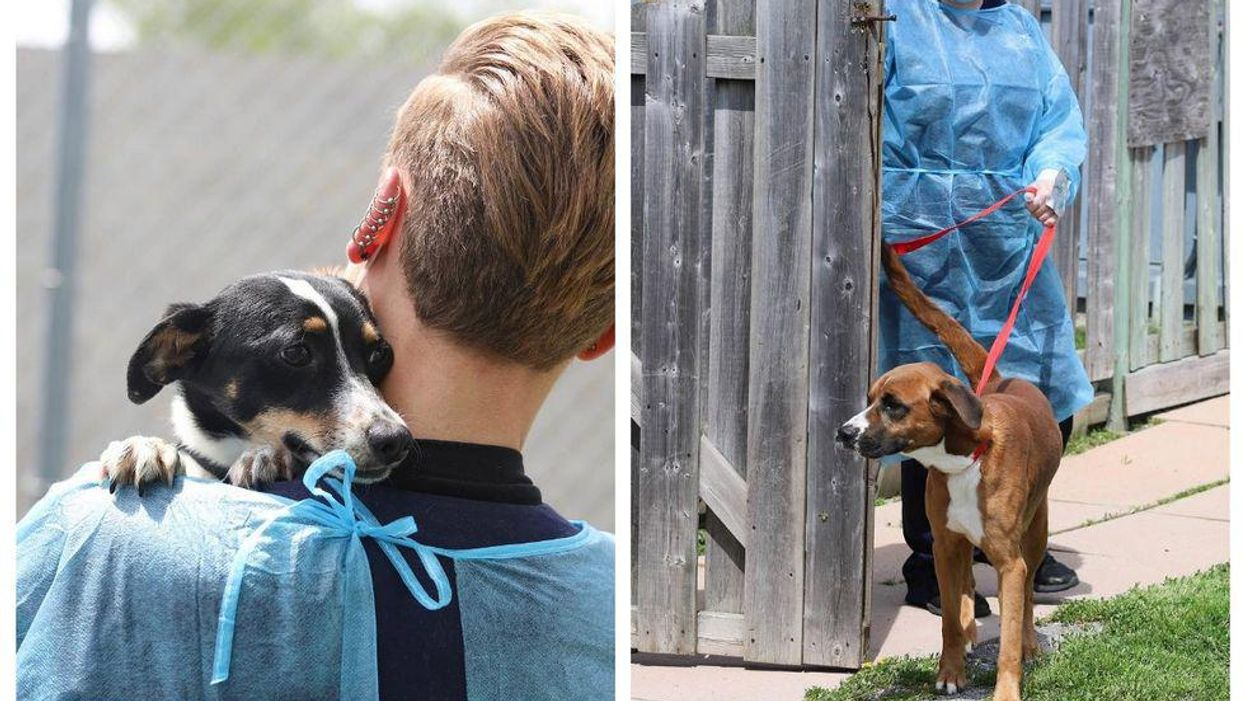 Ontario SPCA Just Got 16 Adorable Dogs From The US & They All Need Forever Homes