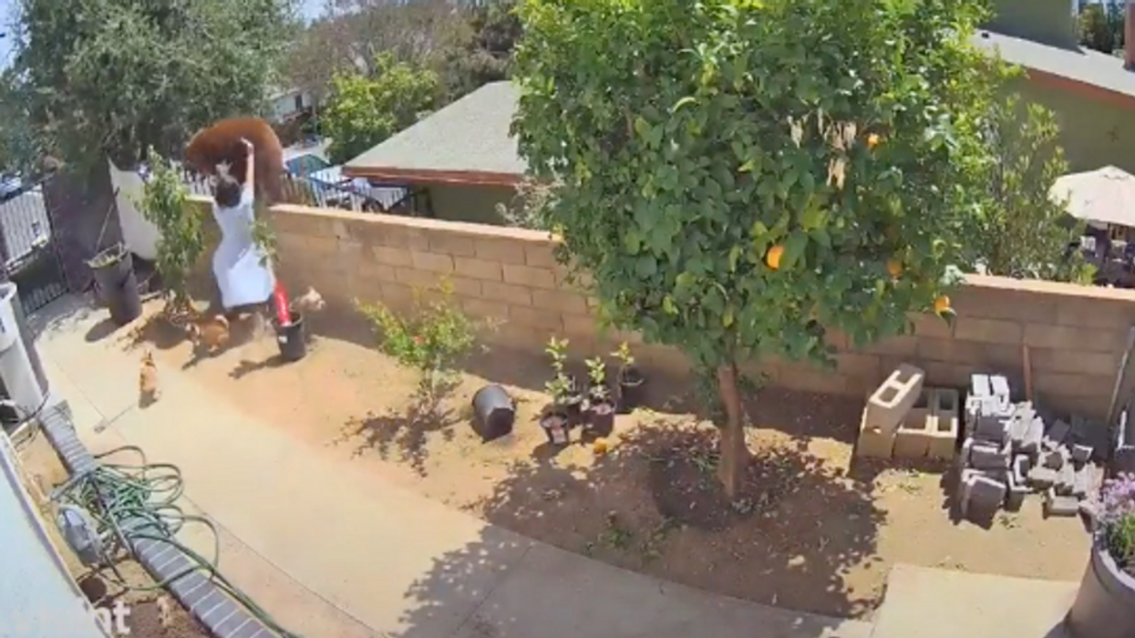 A Utah Woman Pushed A Bear Off Her Fence To Save Her Dogs & The Video Is Unbelievable