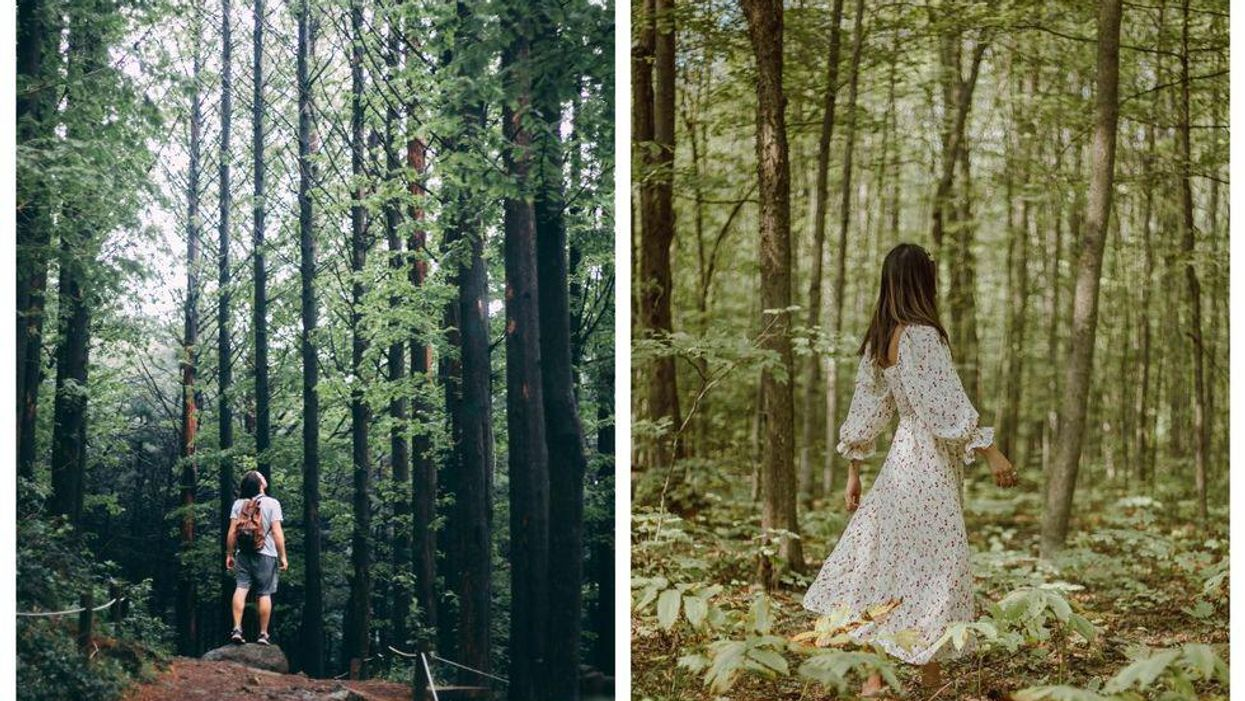 how to do forest bathing