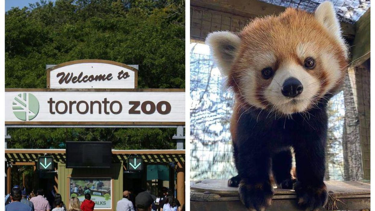 You Can Finally See Animals At The Toronto Zoo This Month But Not Like You're Used To