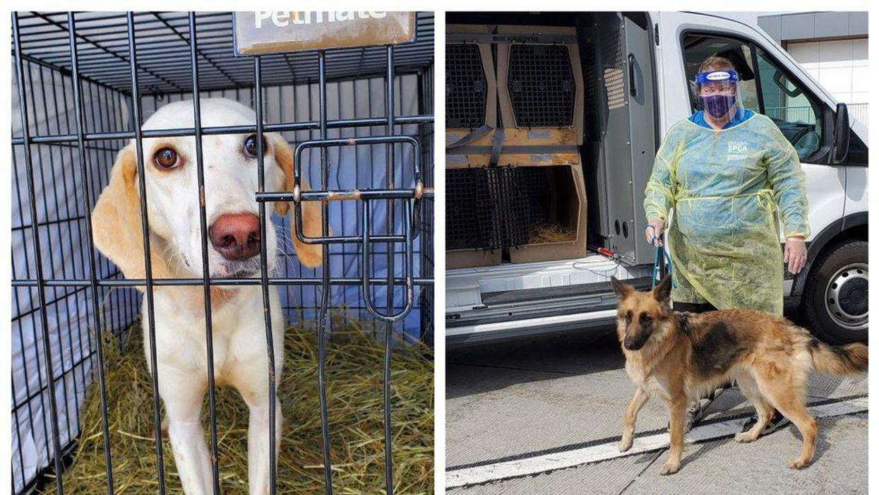 20 Irresistibly Cute Dogs Have Just Landed In Canada & They All Need Forever Homes