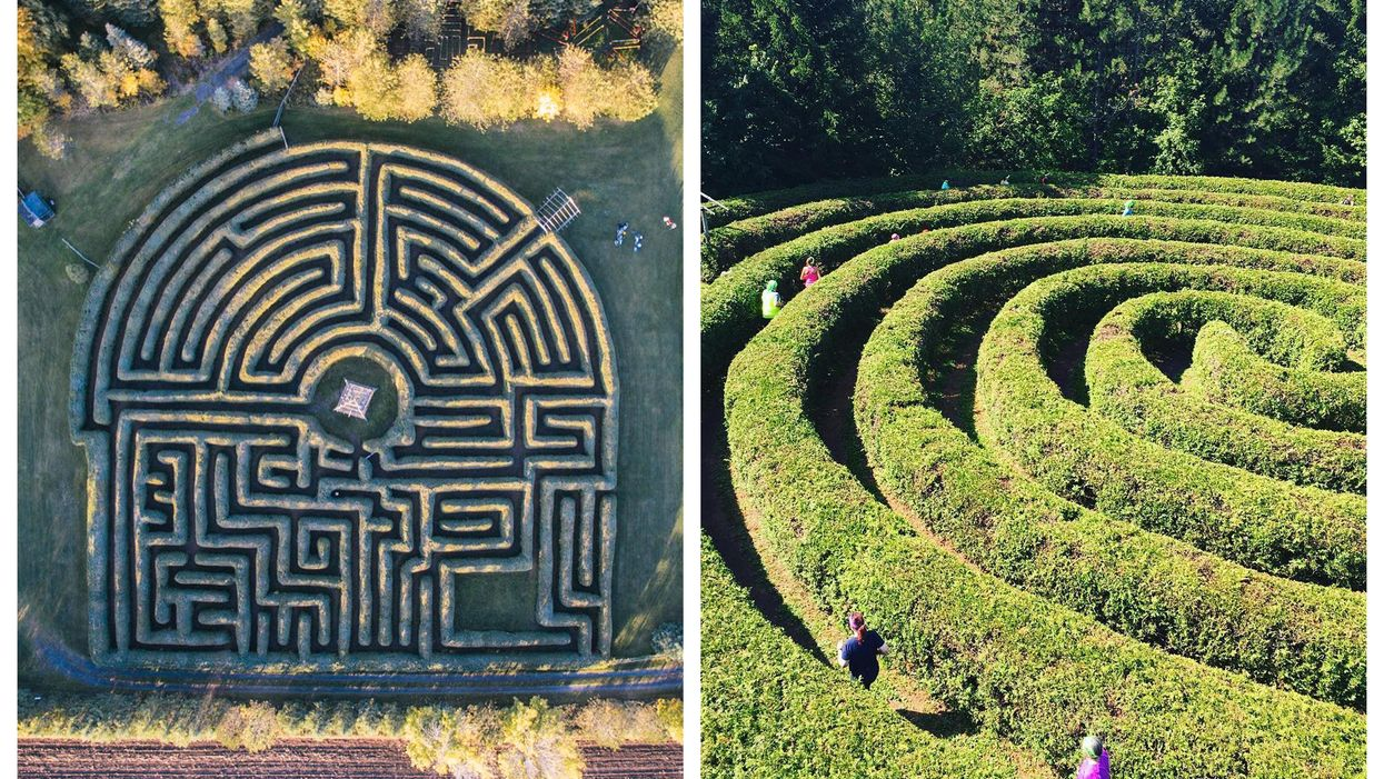 Saunders Farm In Ottawa Has Giant Hedge Mazes You Can Escape