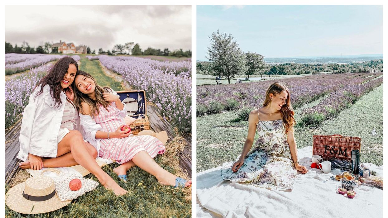 You Can Have A Picnic At This Dreamy Lavender Farm In Ontario
