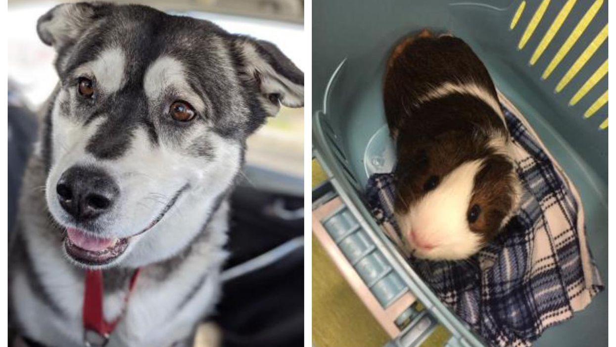 11 animaux en attente d'adoption à la SPCA de Montréal