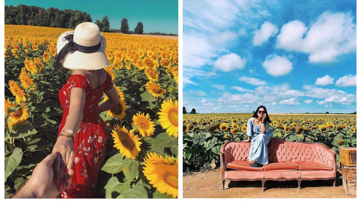 Davis Family Farm Sunflower Festival Near Toronto Has Over 1 Million Blooms