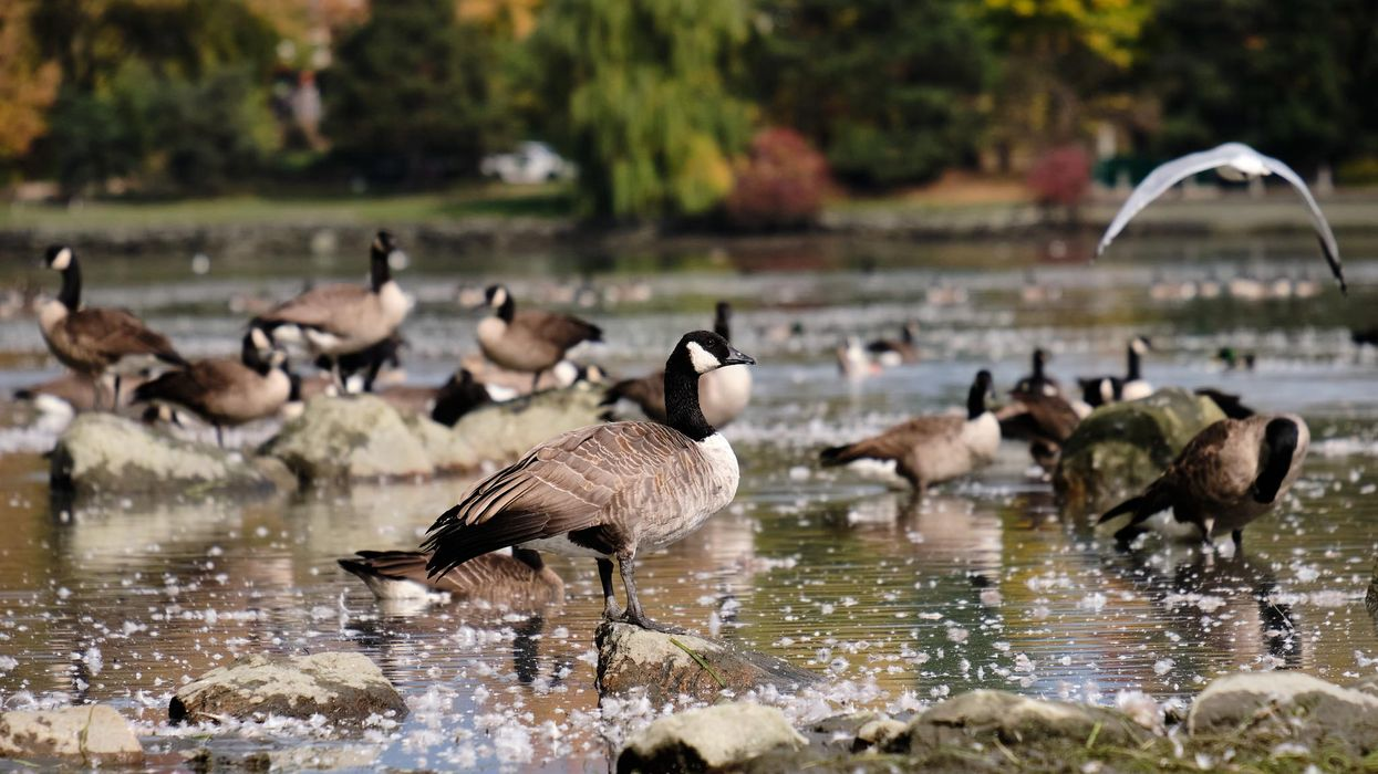 Ottawa Public Health Begs Residents To Stop Bird Poop Problem