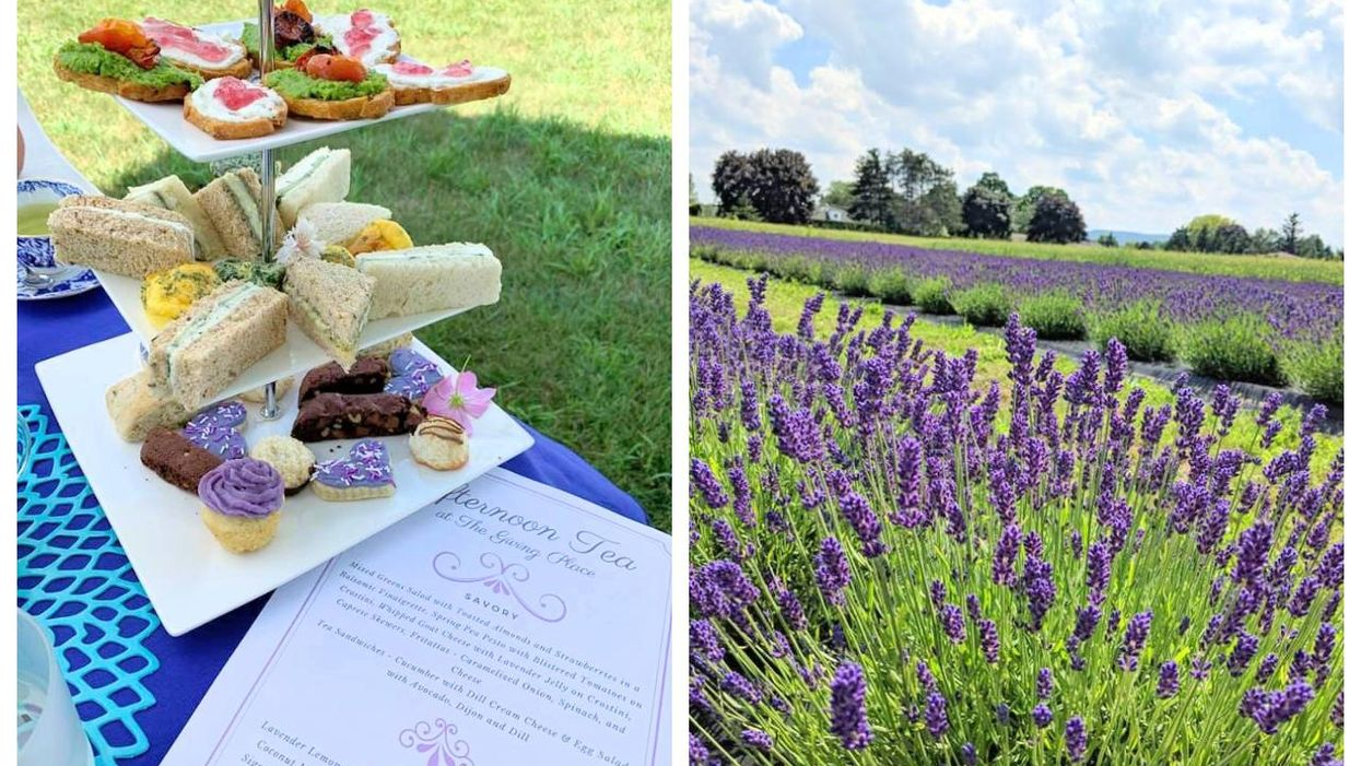 The Giving Place Near Toronto Is Hosting High Tea In Lavender Fields