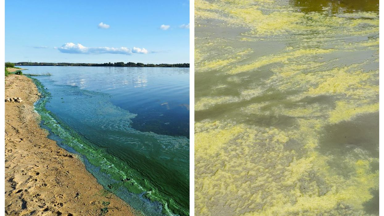 Toxic Blue-Green Algae Found In Ontario Waters This Summer