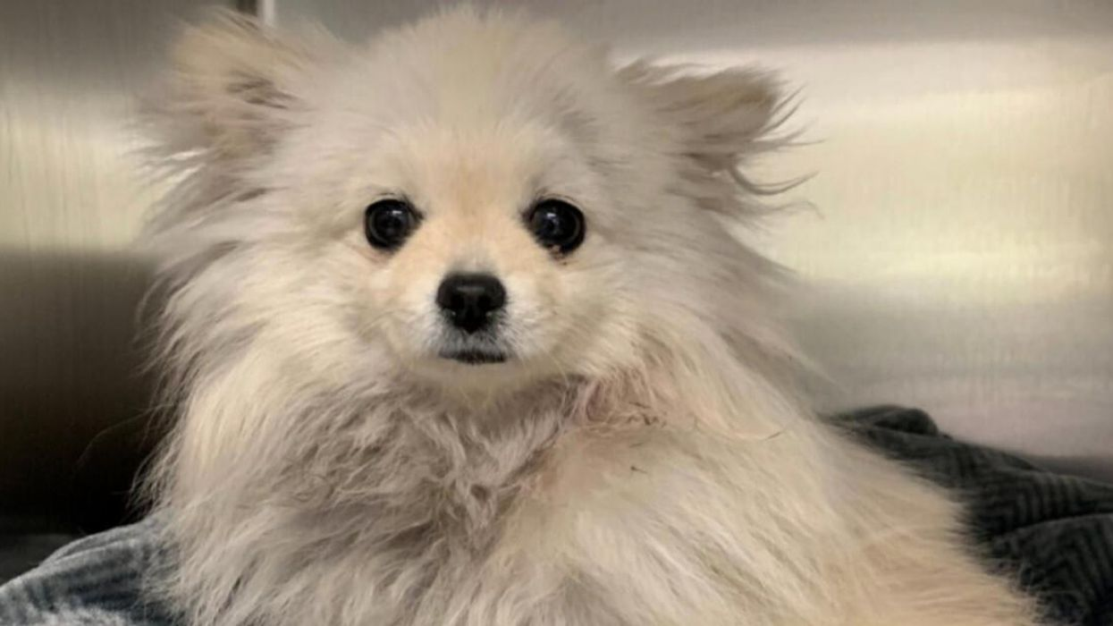 Mississauga Dog Dragged On Its Leash From Moving Vehicle Expected To Make Full Recovery
