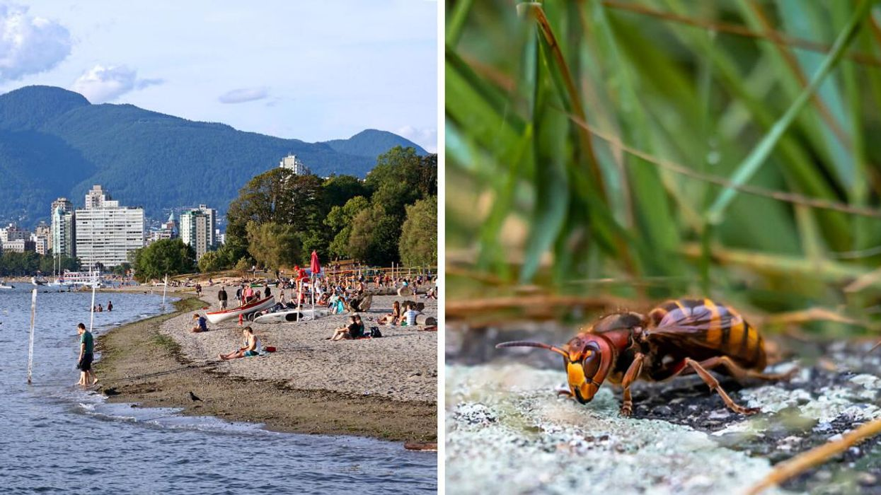 A Murder Hornet Nest Has Been Spotted At The BC Border