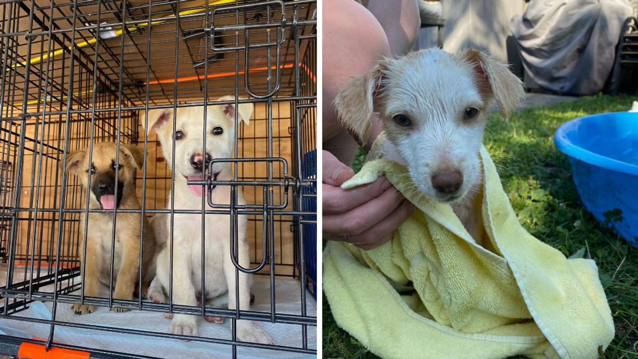 Toronto Rescues Dogs During Manitoba Fires & They Need Homes