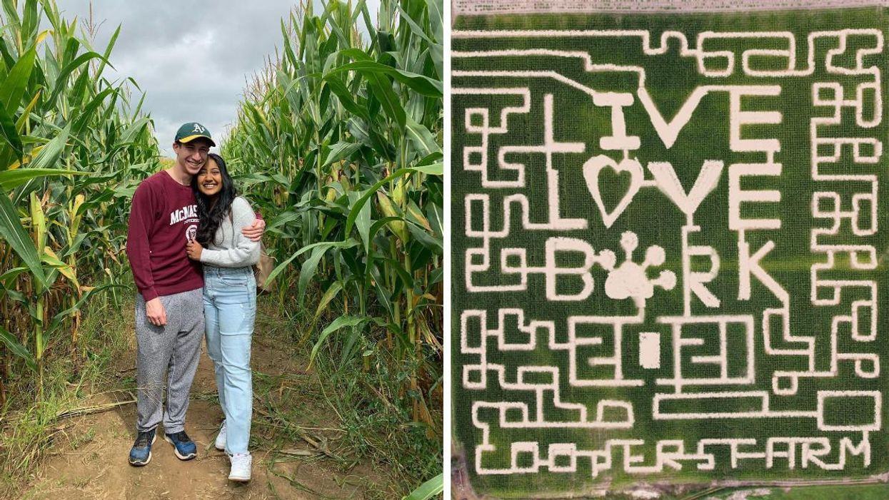 9 Massive Corn Mazes In Ontario That You Can Explore With Your BFF