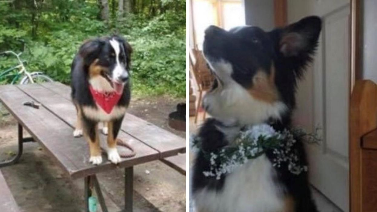 Dog Stolen In Ontario & Police Are Pleading For Its Return