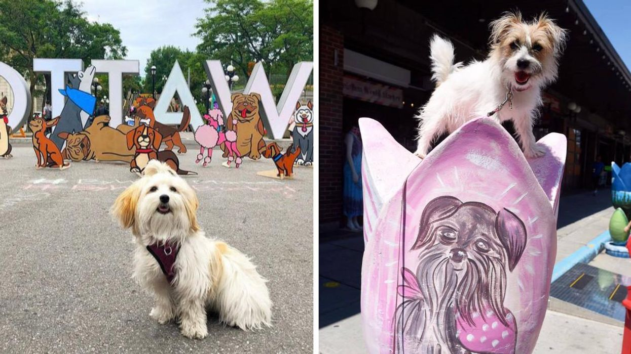 Ottawa's Dog Festival Is Returning To ByWard Market & It's Paw-sitively Adorable