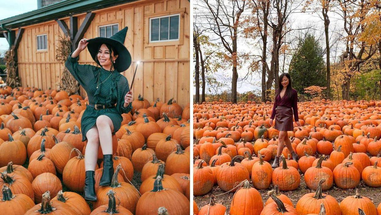 8 Ontario Farms Where You Can Visit A Sea Of Orange Pumpkins