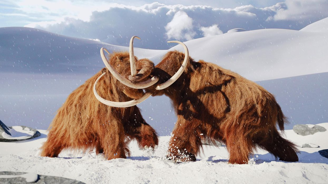 The Woolly Mammoth Could Be Making A Comeback On Earth & Start Roaming The Arctic Again