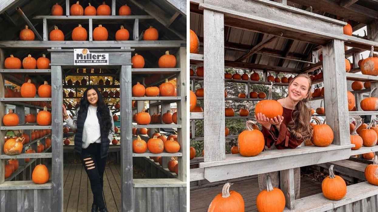 This Ottawa Farm Has An Adorable Pumpkin House & Corn Maze You Can Explore
