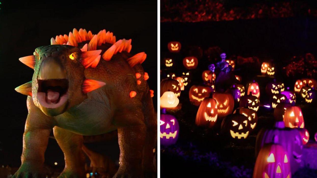 Illumi Laval aura un spécial Halloween et il y a une section avec 50 dinosaures géants
