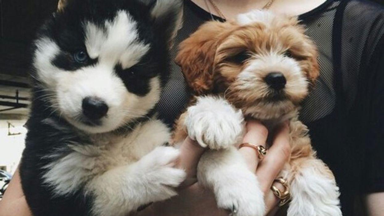 8 bonnes raisons qui convaincront ton chum d'avoir un chien