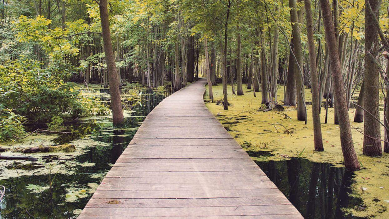 8 Breathtaking Boardwalk Trails You Must Explore In Ontario