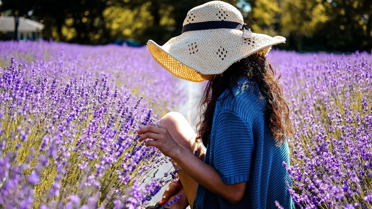 This Niagara-On-The-Lake Farm Just Released Tickets For Their Annual Lavender Festival And We're So Ready