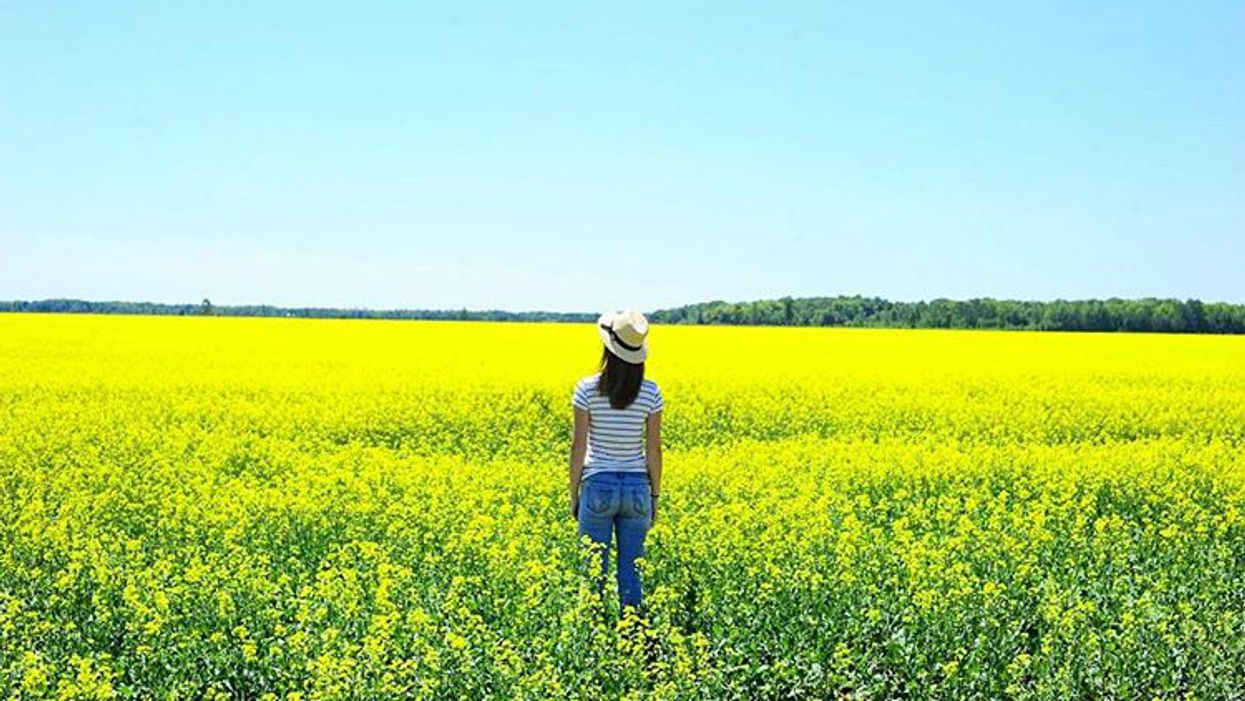 You Must Visit These Breathtaking Yellow Fields In Ontario This Summer