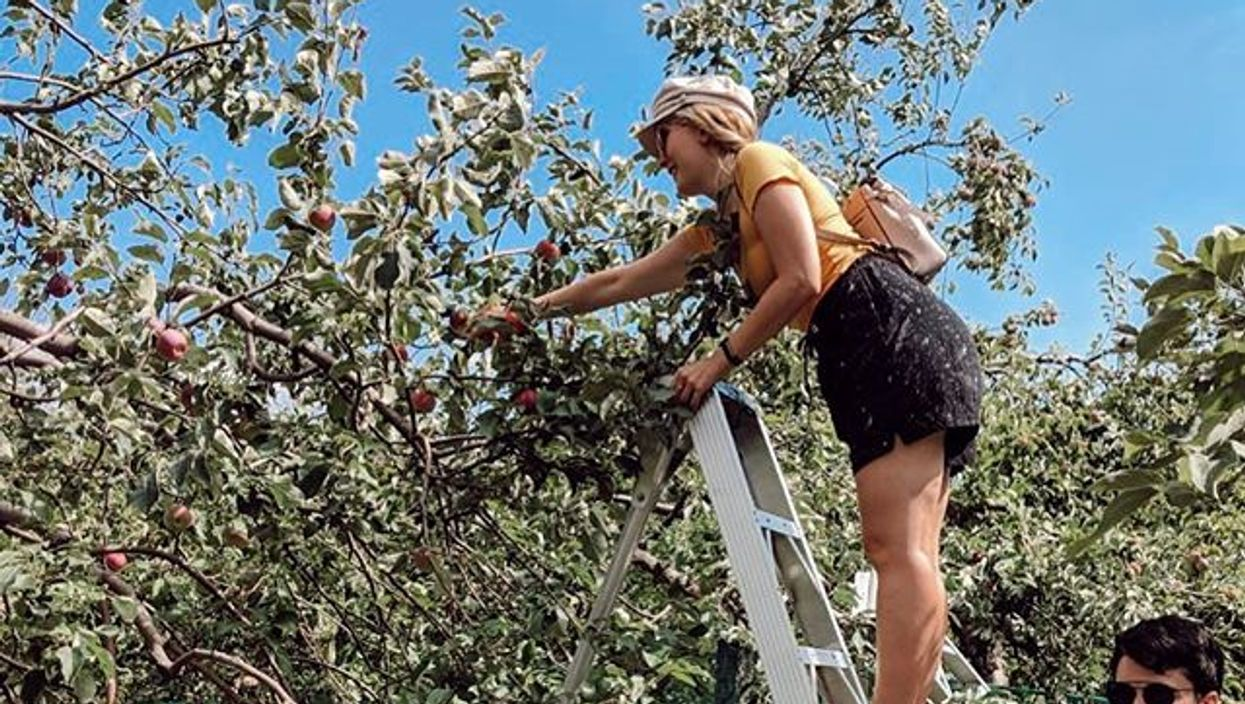 8 vergers près de Montréal parfaits pour ta future cueillette de pommes