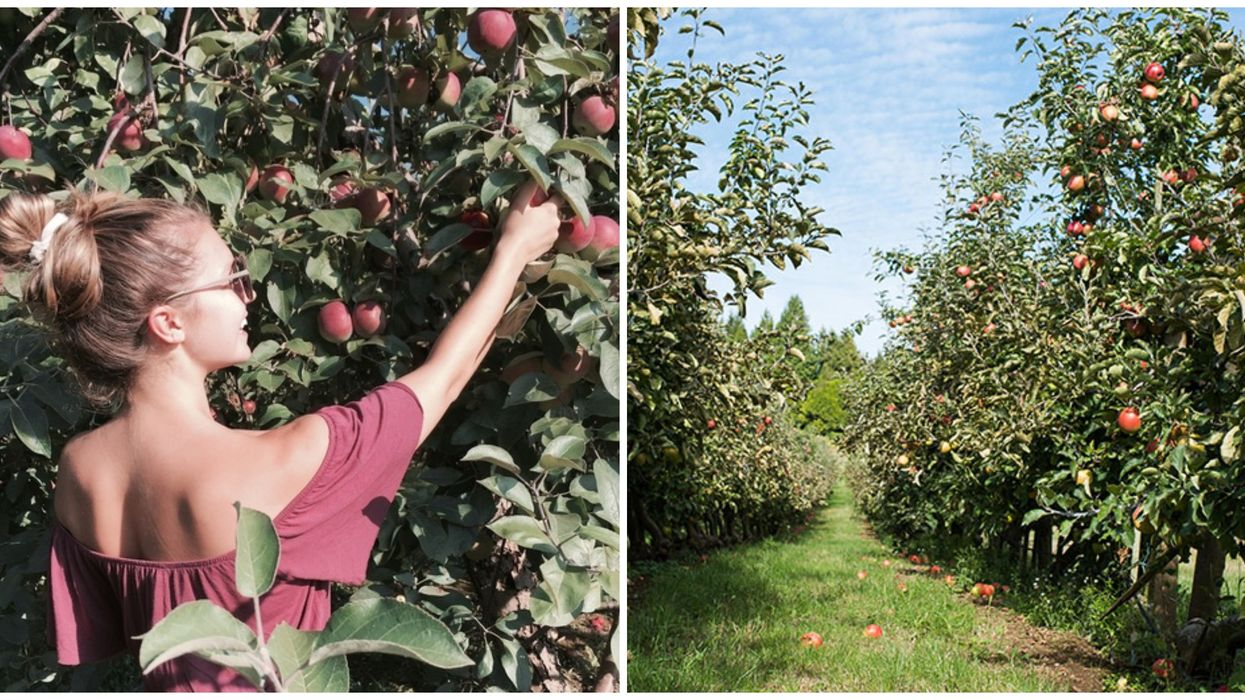 You Need To Visit This Adorable Apple Orchard In BC This Fall