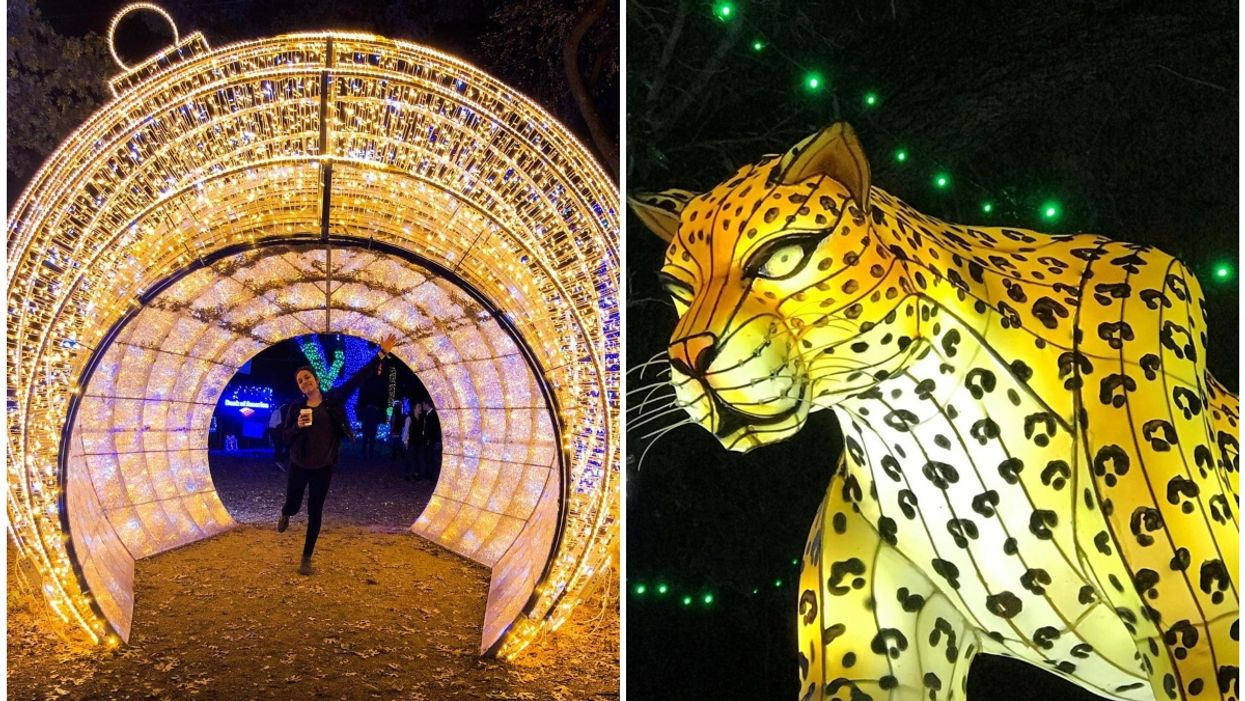 The Dallas Zoo Is Being Transformed With Millions Of Christmas Lights This Holiday Season