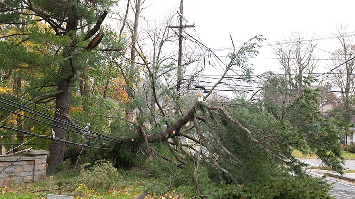150,000 People In BC Are Affected By Power Outages Right Now Due To High Winds Up To 100KM/Hour