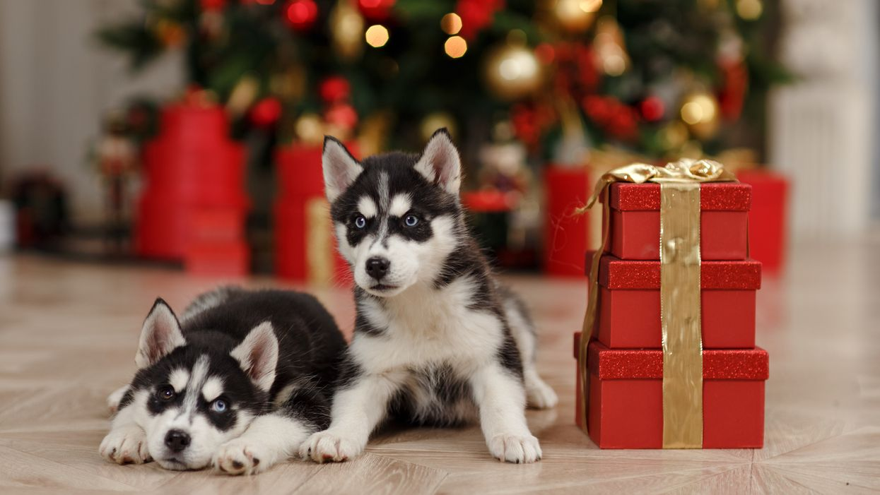 Animal Shelters All Across Canada Have Thousands Of Pets Up For Adoption This Christmas
