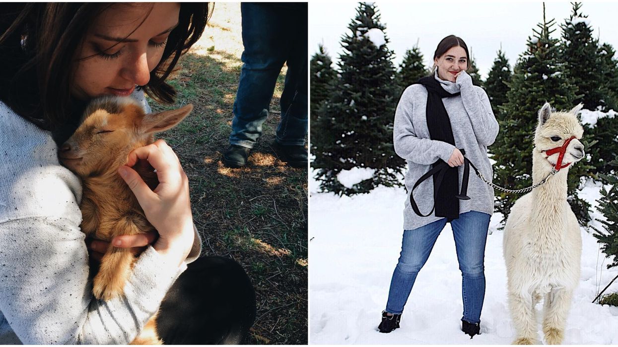 8 Adorable Animal Farms In Ontario You've Got To Visit This Winter