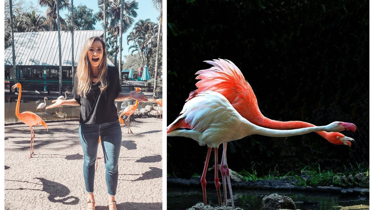 This Florida Park Lets You Get Up Close And Personal With Their Exotic Birds