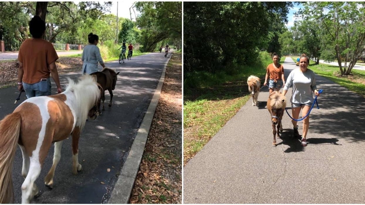 You Can Actually Take A Mini Horse For A Walk At This Florida Ranch