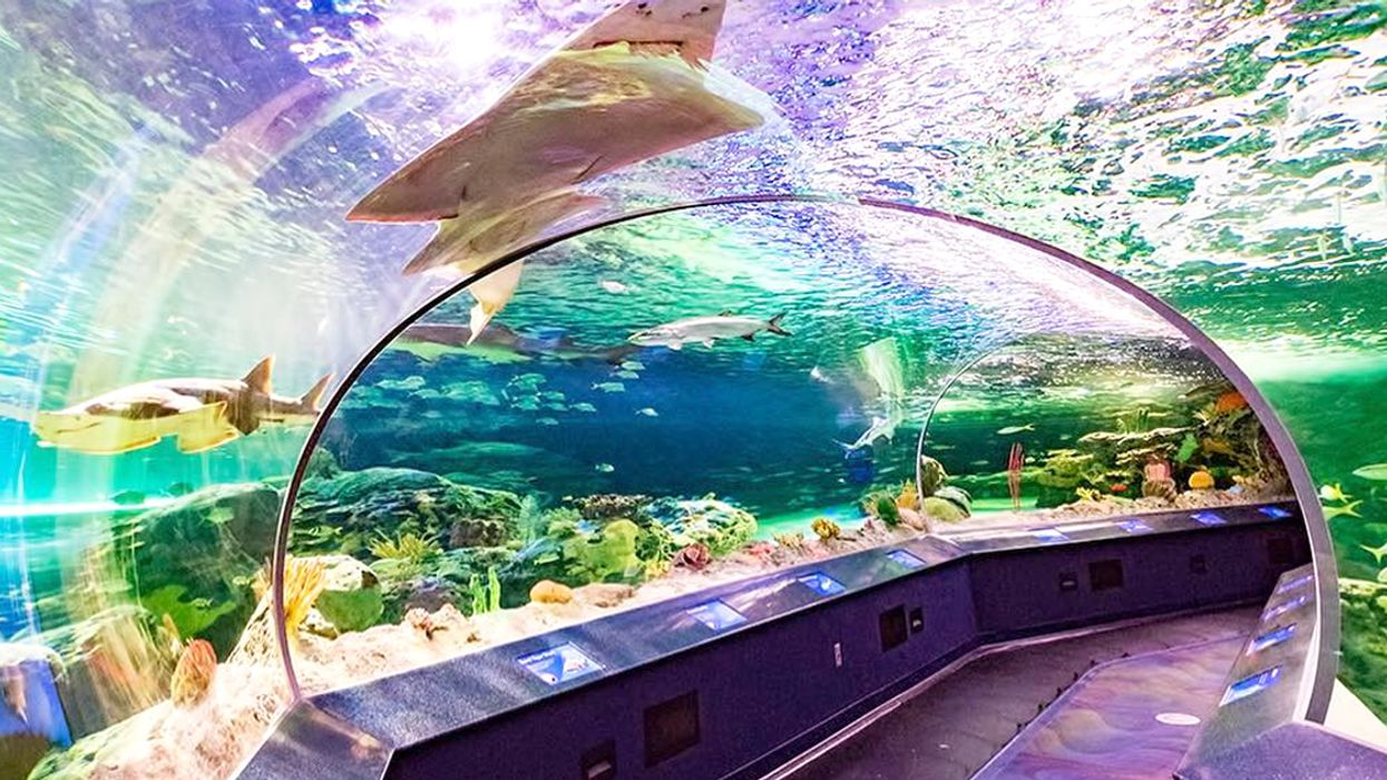 Ripley's Aquarium In Toronto Is Hosting An Incredible 19+ Paint Night This Summer