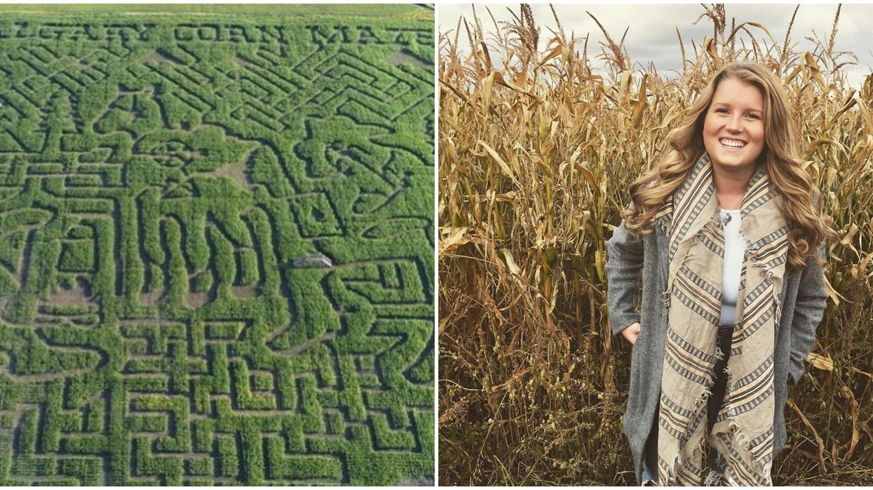 You Can Get Lost In A Massive Corn Maze At This Farm Near Calgary This August