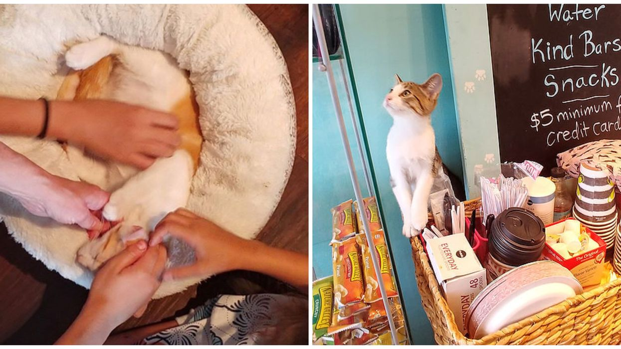There Is An Adorable Cat Cafe Hidden In Fort Lauderdale