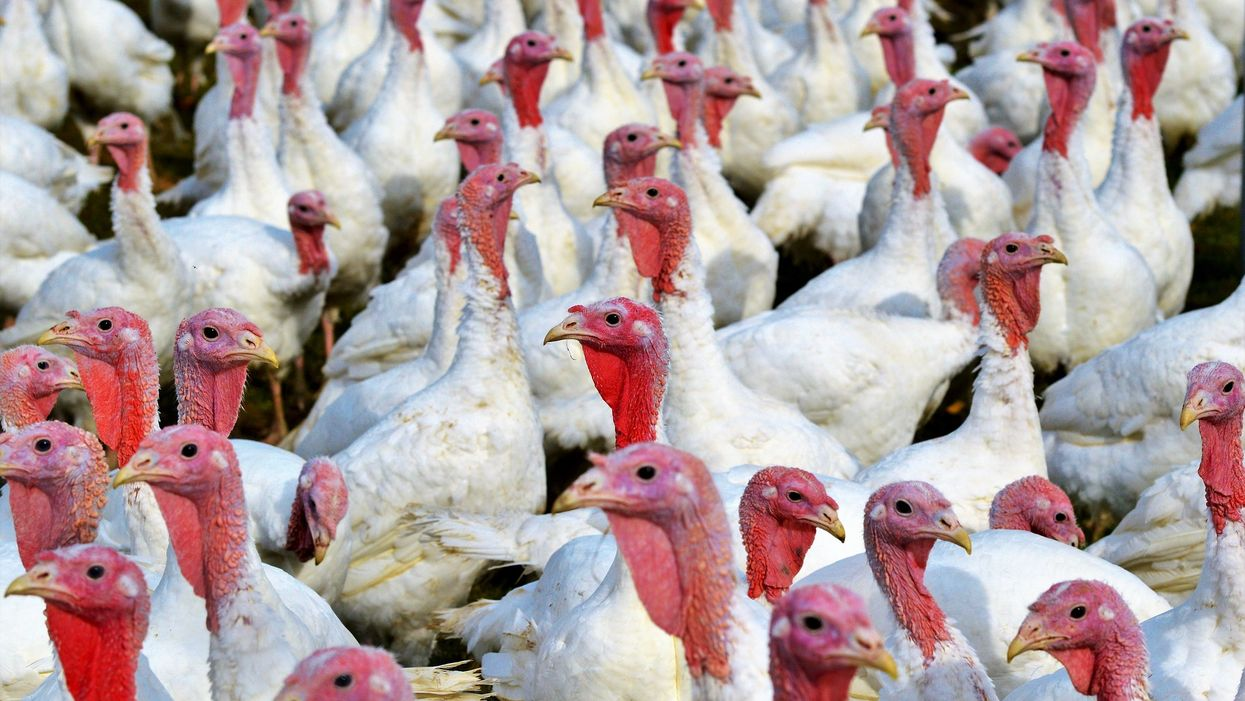 60 People Protested Inhumane Conditions At A Turkey Farm In Alberta Yesterday (VIDEO)